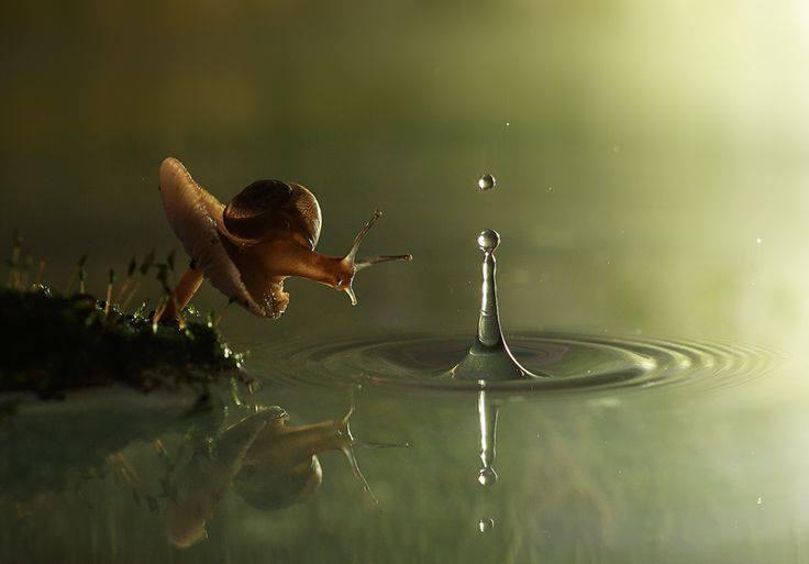 aria chanson de deux escargots qui vont a lenterrement jacques prevert texte enterrement