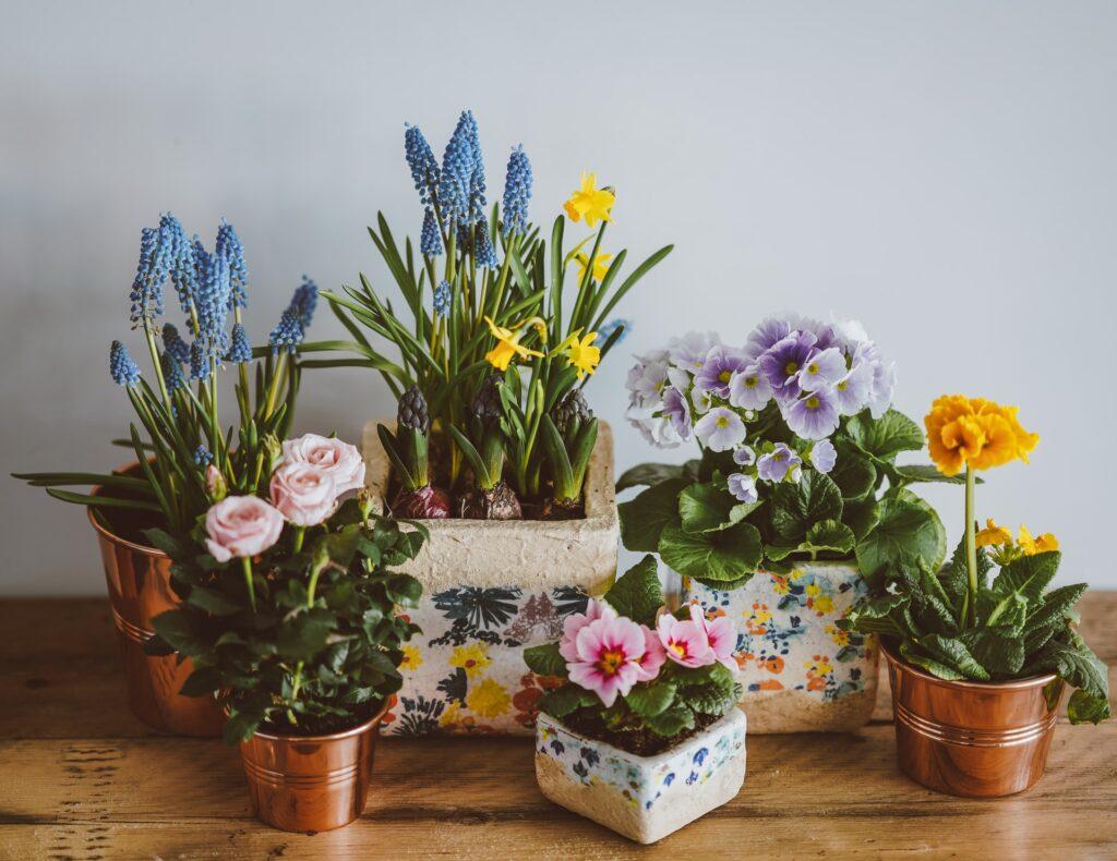 aria la petite plante conte philosophique texte enterrement