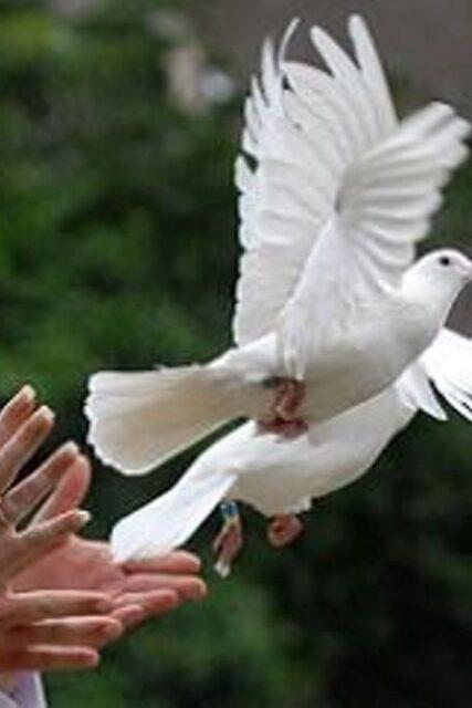 aria lâcher de colombes au cimetière inhumation rituel cérémonie funéraire